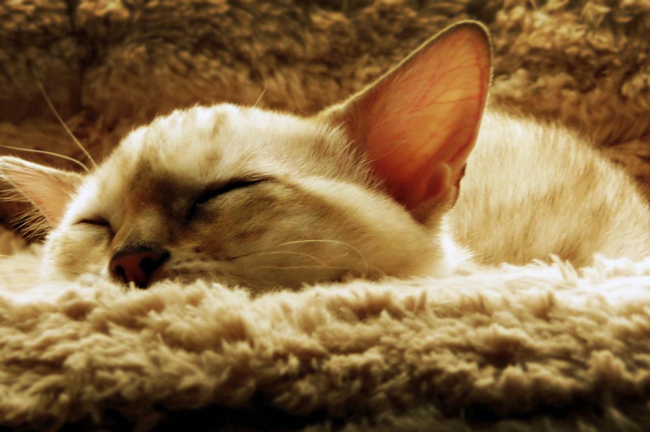 Cats Cradle: sleeping cat.